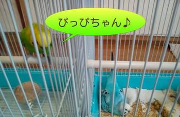 ぴ-ぴっぴ.jpg